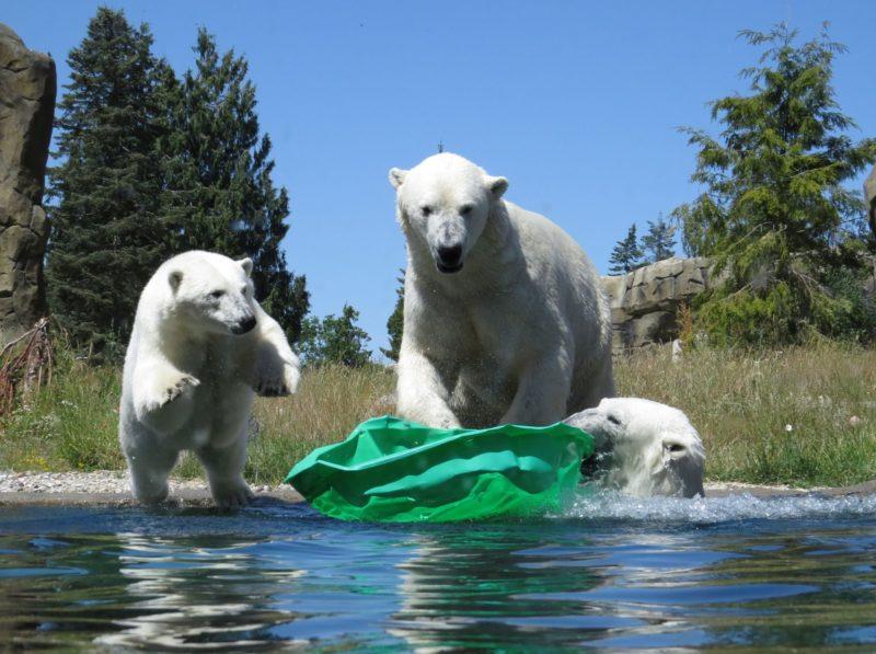 Zoo Rostock kehrt langsam zum Normalbetrieb zurück
