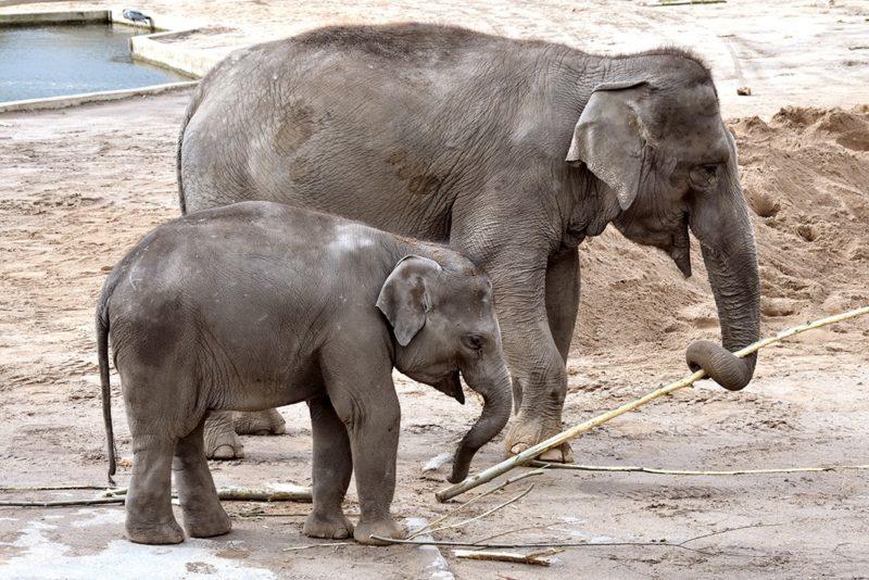 Kölner Zoo ab morgen wieder für Besucher geöffnet
