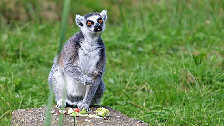 Tierpark Sababurg geöffnet